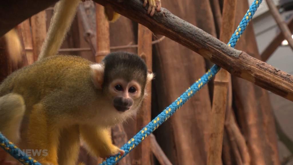 Tierische Langeweile im Dählhölzli: So werden die Zoo-Bewohner unterhalten