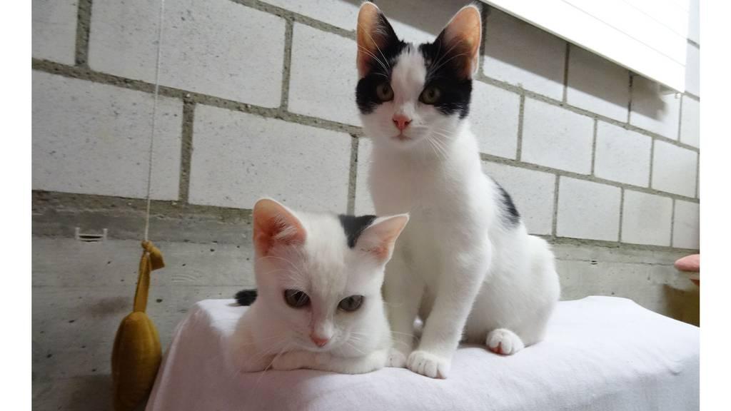 Katzenwelpen