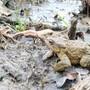 Amphibien in Urdorf