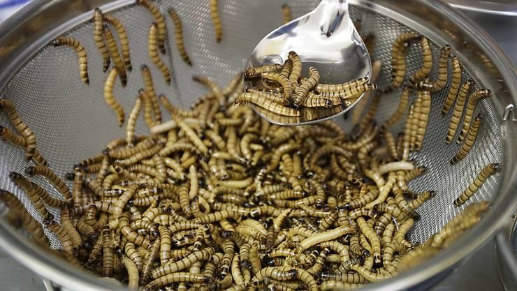 Mehlwürmer sind gute und günstige Proteinlieferanten. Ob sie sich auf dem Speisezettel durchsetzen, steht auf einem anderen Blatt.