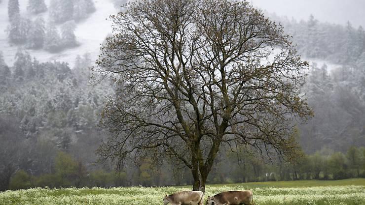 Schnee statt Sonne: Der späte April wartet in der Schweiz weiterhin mit frostigen Nächten auf. (Archivbild)