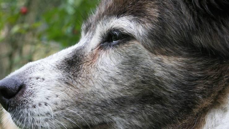 """der literarische Hund """"RUBY"""""""