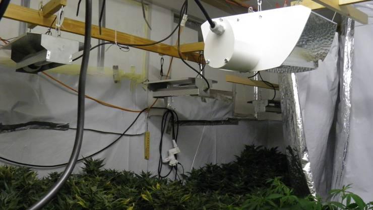 Die Indoor-Hanfanlage war im Keller eines Einfamilienhauses in Liestal versteckt.