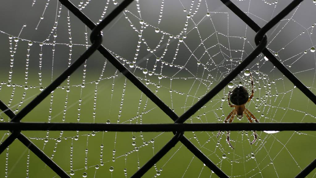 Spinnen-Jahreszeit: So hältst du die Tierchen fern