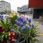 Blumenarrangements in der Stadt Grenchen