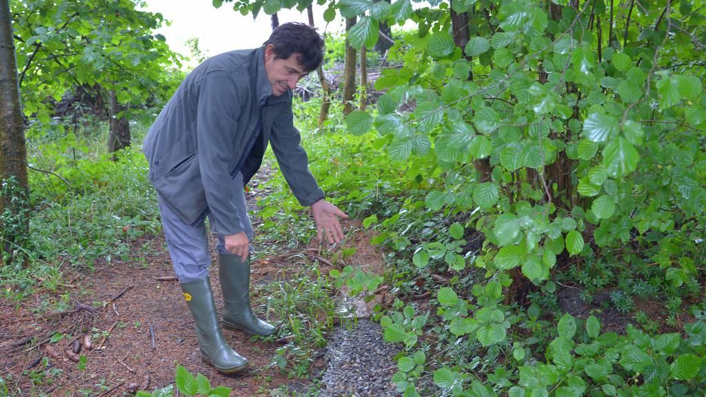 Gemeinde entsorgte nicht abbaubaren Asphalt im Wald