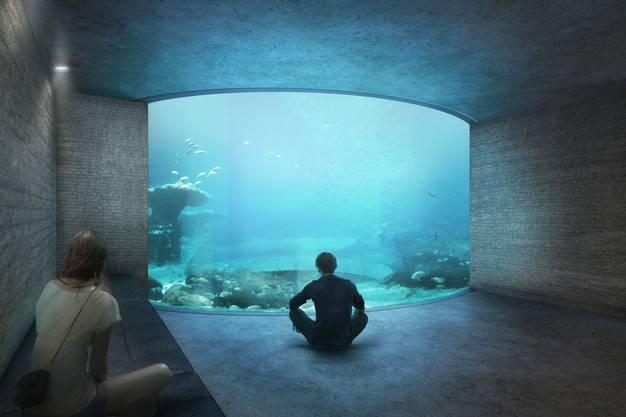 Schwarm-Aquarium