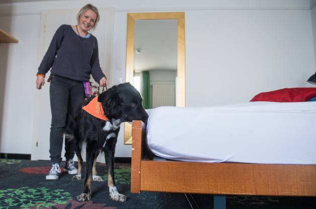 Nadine Graage beim Übungseinsatz mit ihrer Bettwanzenspürhündin Leni.