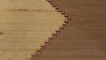 Der Sojapreis befindet sich auf Rekordhöhe: Sojaernte in Brasilien (Archiv)