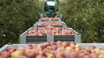 Apfelernte in der Schweiz (Symbolbild)