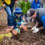 Bepflanzung Leberberg nach Burglind