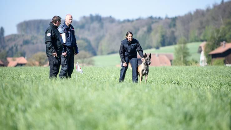Schweizer Meisterschaften der Polizeihundeführer 2017 in Lüterkofen: Disziplin Schutzdienst. Der Hund hat den «Täter» gesehen