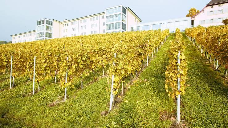 Tschugg: Die Klinik Bethesda ist vom Grün der Rebberge, Wiesen und Bäume umgeben und bietet Aussicht auf eine reizvolle Landschaft. ts