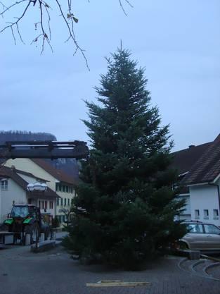 Weihnachtsbaum in voller Grösse