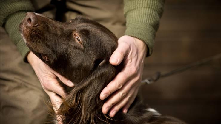 70 Prozent der Verfahren im Tierschutz drehten sich im Kanton Zürich 2014 um den Hund. Annika Bütschi