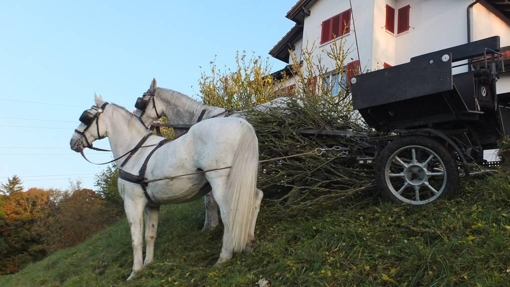 Pferdekutsche überschlagen