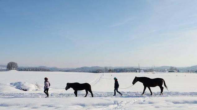 Frauen mit Pony und Pferd bei Winterberg im Kanton Zürich am 10. Febuar 2013 (Archiv)