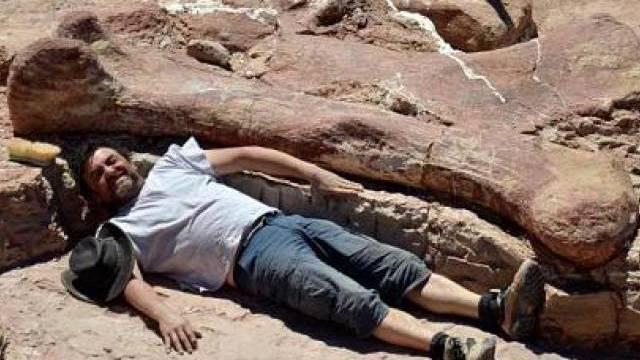 Mannsgrosse Knochen lassen auf ein riesiges Tier schliessen