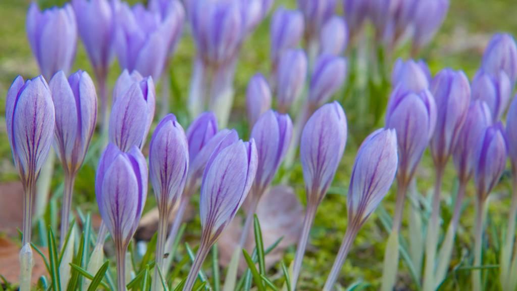 Perfekter Start in den Frühling