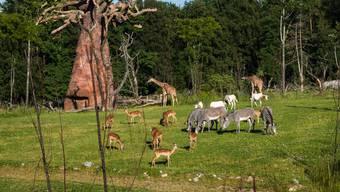 Die neue Lewa Savanne im Zoo Zürich