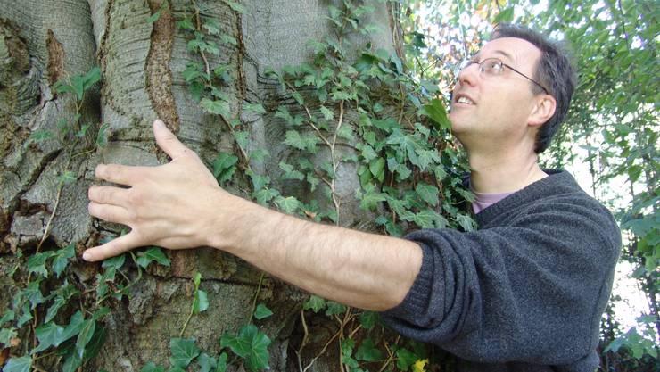 Werner Schwehr: Der 80-jährige Baum prägt das Ortsbild – und soll deshalb bleiben. Fuoli Flavio