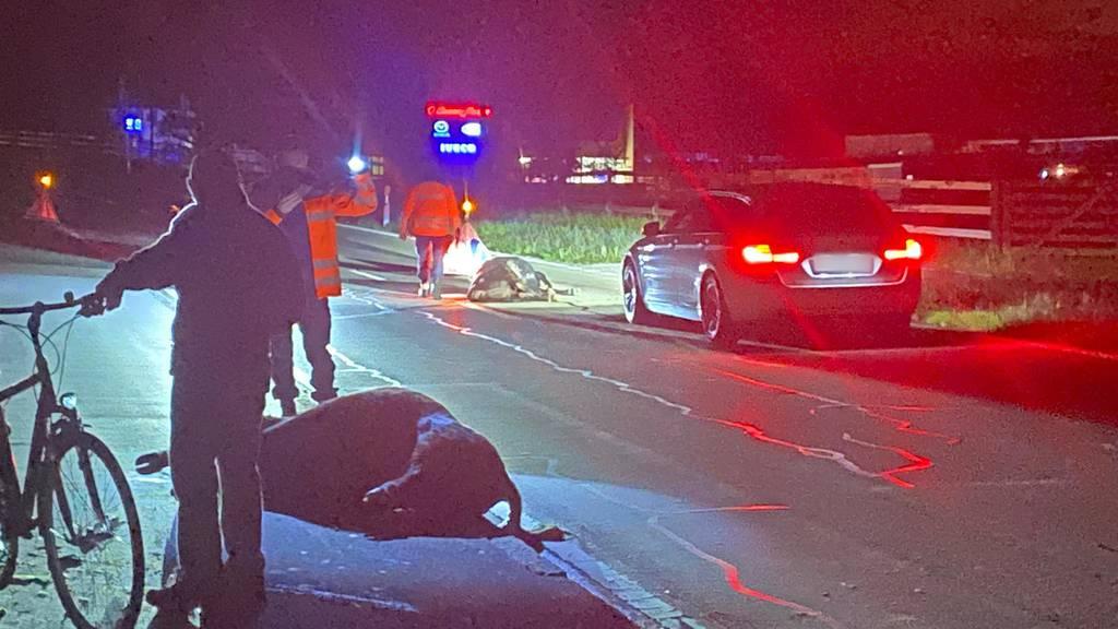 Seuzach: Zwei Rinder sterben bei Kollision mit Auto