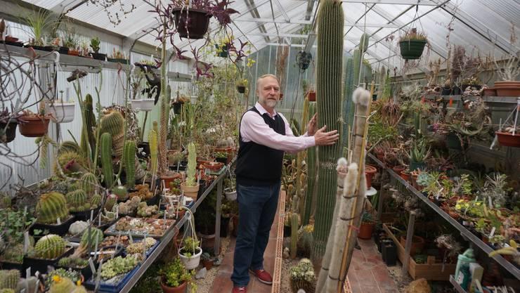 Noch eine letzte Umarmung und dann verlässt der 50-jährige Kaktus der seit vier Jahren Blüten trägt und nun rund zweieinhalb Meter gross ist seinen Besitzer Michel Gelbert.