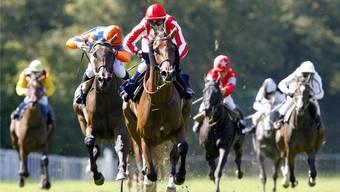 Mit Galopp dem Erfolg entgegen: Die Pferderennen im Aarauer Schachen gelten als Höhepunkt der Rennsaison.