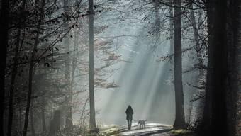 Der Wald wird künftig an Wichtigkeit gewinnen. Auch als Speicherfläche von CO2 und Lieferant von sauberem Trinkwasser. (Symbolbild)