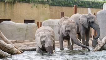 Nach etwas mehr als drei Jahren Bauzeit öffnet der Zoo Basel die neue Elefantenanlage Tembea erstmals für das Publikum. Die neuen und vergrösserten Aussenanlagen und das neue Haus werden von Elefanten, aber auch von Krallenfröschen, Wanderratten und Ernteameisen bewohnt. Am Wochenende vom 18. und 19. März findet ein Eröffnungsfest für das Publikum statt.