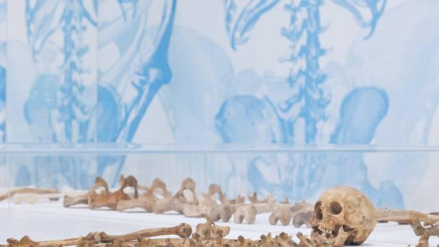 Knochen tragen viele Informationen in sich: Exponat der Ausstellung in Basel (Bildquelle: www.nmb.bs.ch)