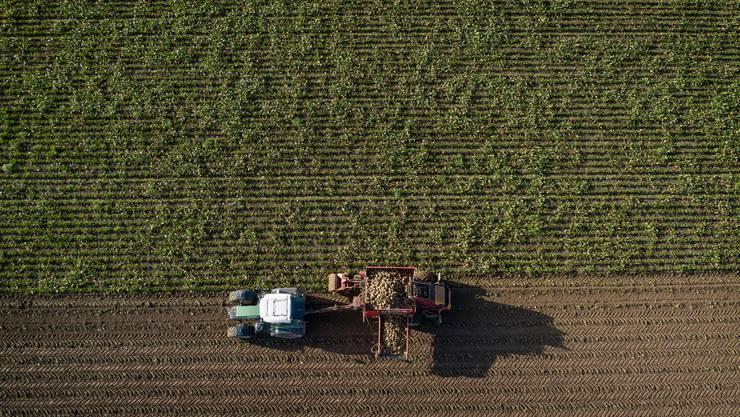 Zuckerrüben anbauen ist «ökologisch eher bedenklich»: Darum will die zuständige Nationalratskommission nur Biobauern stärker unterstützen.