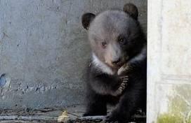 Bilder vom bärenstarken Nachwuchs in Bern sehen Sie hier!