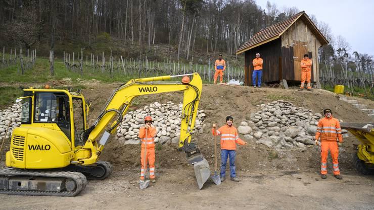 Sechs Lernende der Walo Bertschinger AG errichteten im Rebberg Hasleren in Weiningen Steinlinsen für Eidechsen.