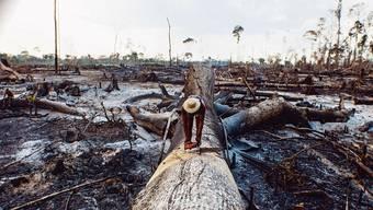 Etwa 30 Millionen Hektaren Regenwald werden pro Jahr weltweit vernichtet, so wie der Amazonas-Regenwald in Brasilien.