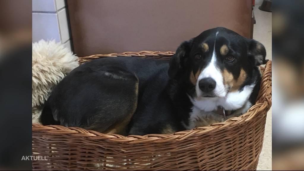 Hund totgefahren: Brittnauerin sucht mit Leserbrief nach Täter