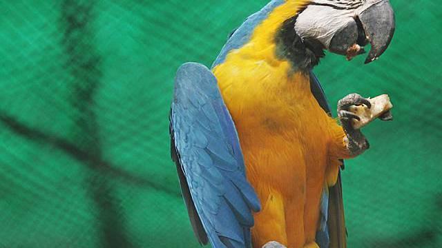 Gut investiert: Papagei (Archiv)