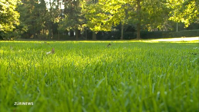 Nach Hitzesommer: Das Grün am Boden täuscht