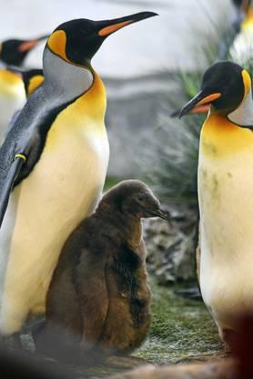Doch dank dem Engagement der Pfleger im Zoo Zürich...