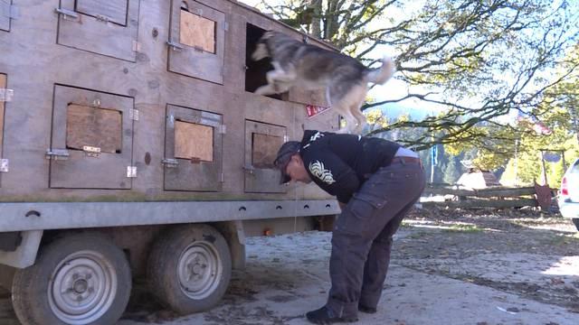 """""""Husky-Farmer"""" wandert aus"""