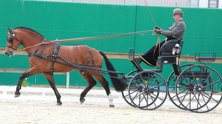 4. Rang Promotionfahren 4+5-jährige Pferde für Werner Pfister mit Henriccione CH