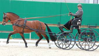 Freibergerpferde werden in Balsthal präsentiert