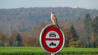 Eine engere Zusammenarbeit mit dem Natur- und Vogelschutz ist geplant. (Archiv)