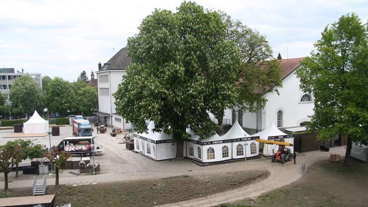 Die beiden Bäume stehen den Plänen der Rythalle AG für einen neuen Anbau entgegen.