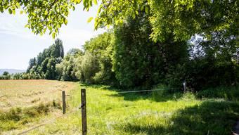 Der Weierbach im Grenzgebiet zwischen Oberwil und Binningen gehört zu den Schweizer Kleinbächen, die am stärksten mit Pflanzenschutzmitteln belastet sind. (Archiv)