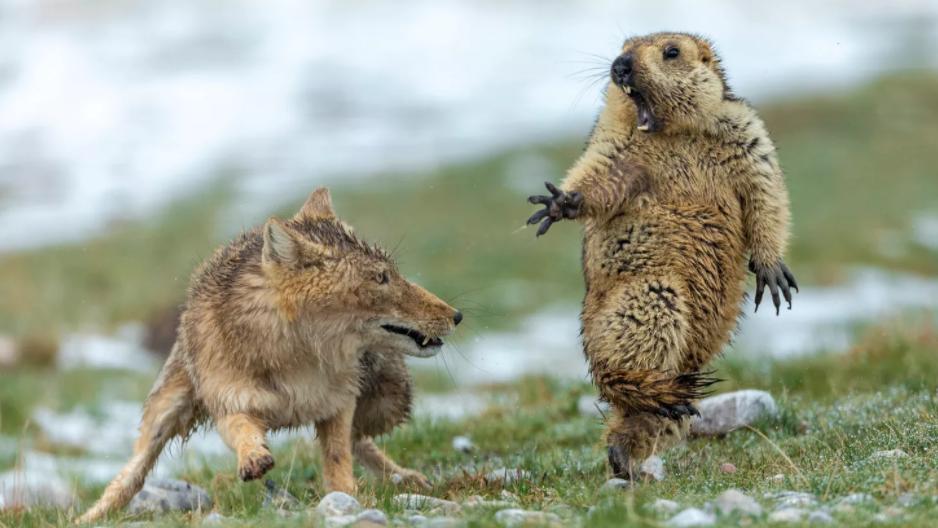 Bestes Wildlife-Naturbild des Jahres