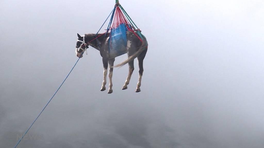 Grimselstausee: Spektakuläre Pferde-Rettung mit Heli