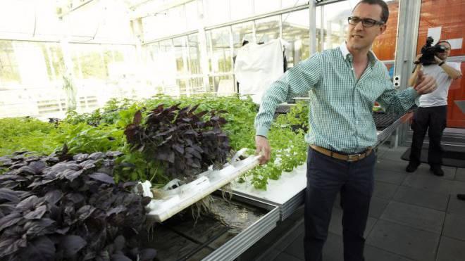 Bodenloses Gewächs: Roman Gaus, CEO der Urban Farmers AG, zeigte Journalisten vor zwei Jahren die Pilotanlage.  Foto: Kenneth Nars