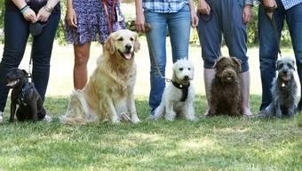 Hundehalter müssen keinen obligatorischen Kurs mehr absolvieren.