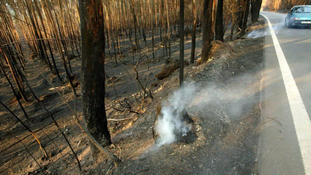 Schwelender Brand in einem portugiesischen Eukalyptuswald. Eukalyptusbäume sind leicht entzündbar und werden für die Ausbreitung von Waldbränden mit verantwortlich gemacht. (Archiv)